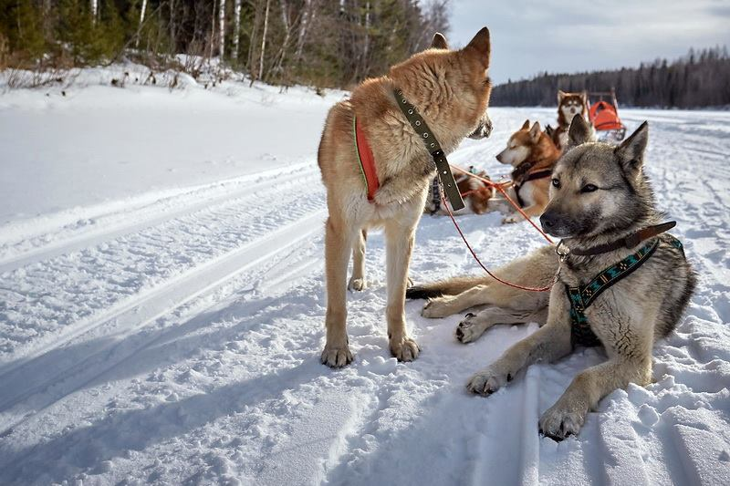 Dyatlov-pass-photos-Ural-Expeditions-and-Tours-031